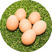 栃木県産の産卵